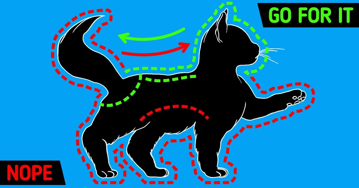 How to Pet Your Cat in the Right Spots