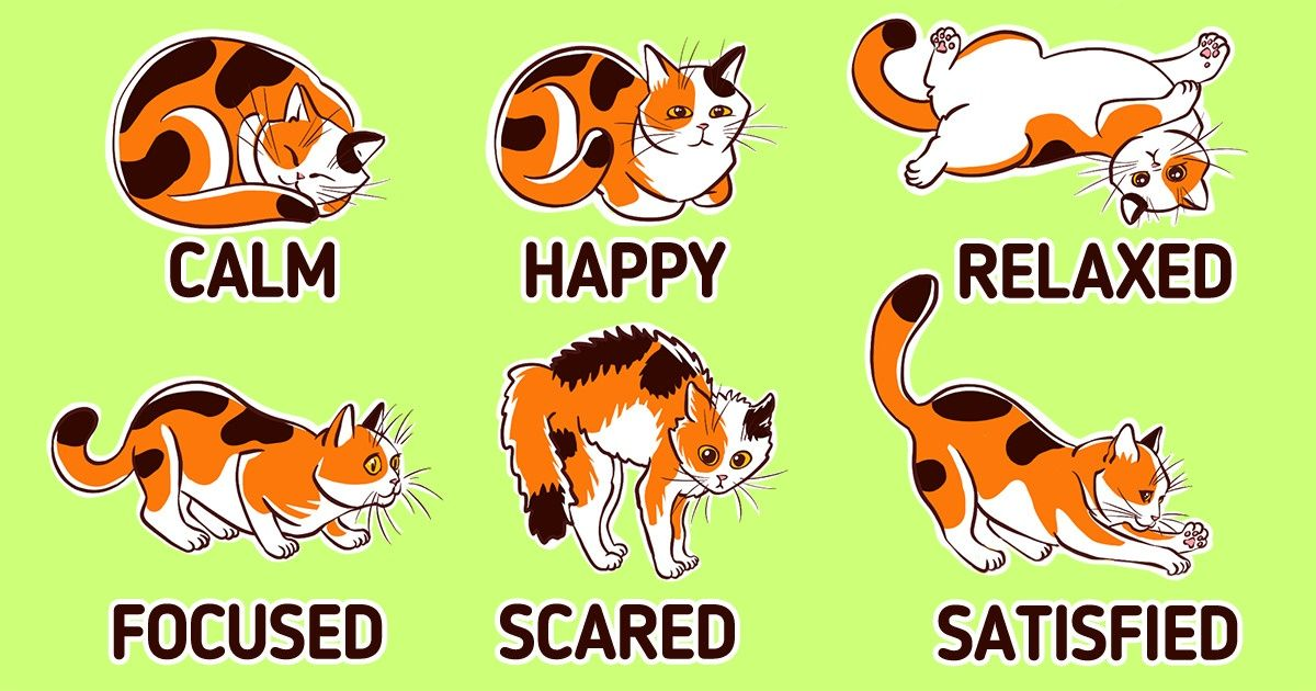 How to Understand Your Cat's Body Language