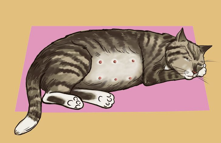 How to Know if Your Cat Is Pregnant